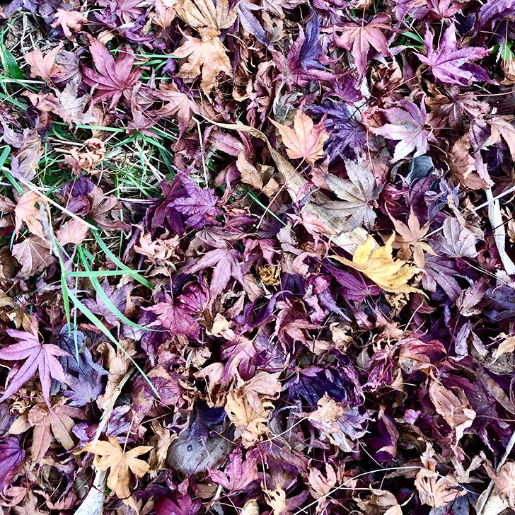 田貫湖の湖畔の落ち葉の写真2