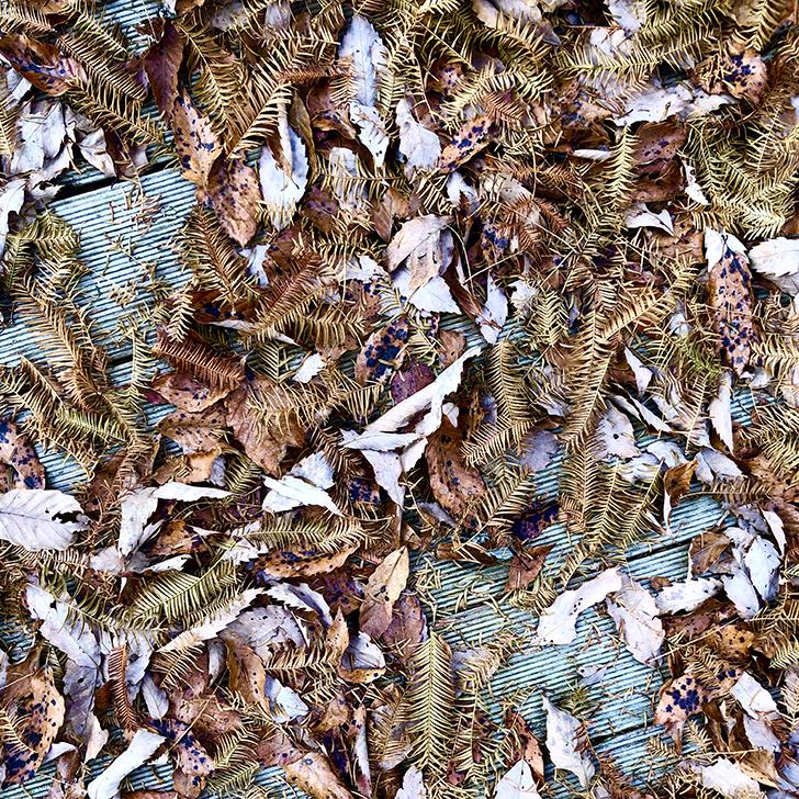 田貫湖の湖畔の落ち葉の写真1